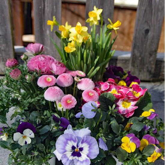 Pflanzen Mix Frühling