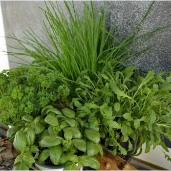 Kleiner Kräuter Garten Mix