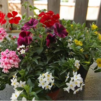 Pflanzen Mix Sommer hängend