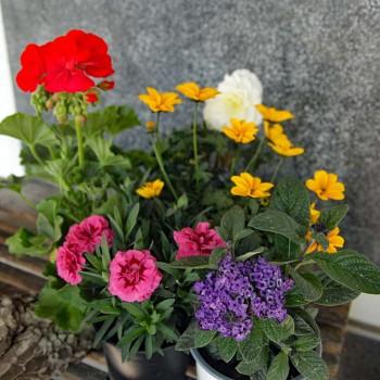 Pflanzen Mix Sommer stehend