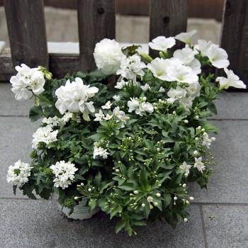Cool Sommer Pflanzen Mix stehend und hängend