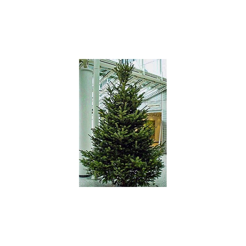 3 0 meter weihnachtsbaum 1a premium qualit t. Black Bedroom Furniture Sets. Home Design Ideas