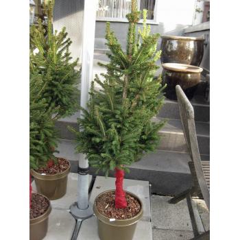 Formschnitt Weihnachtsbaum im Topf ca. 100 cm