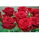 Roter Rosenstrauß ca. 60 cm Länge