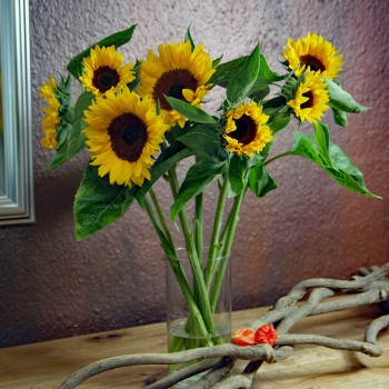 XXL Sonnenblumen pur