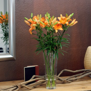 XXL orange Lilien
