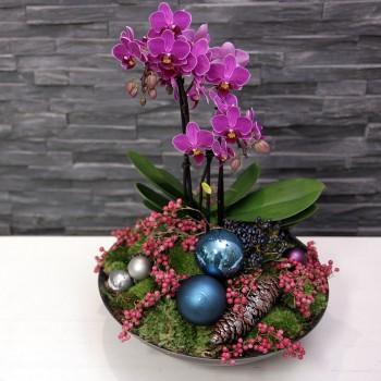 Winter Orchidee